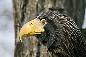 Portrait Of An Eagle Stock Photos - Image: 23078683