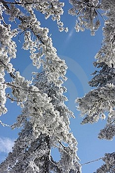 Snowy Branches Stock Image - Image: 23093501