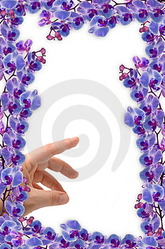 Beautifull Orchids Frame Stock Photos - Image: 2315103
