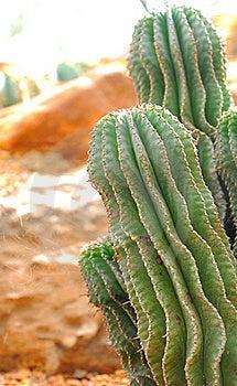 Cactus Stock Image - Image: 23108891