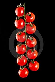 Tomato Stock Photography - Image: 23129142