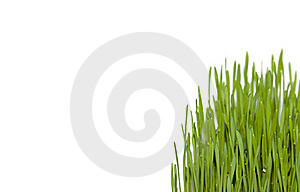 Green Grass Isolated On White Background Stock Images - Image: 23154284