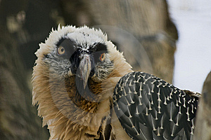Bird Of Prey Royalty Free Stock Image - Image: 23185706