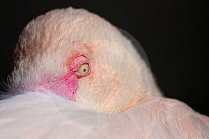 Pelican Eye Stock Photo - Image: 23187720