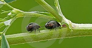 Shield Bug Stock Image - Image: 23196681