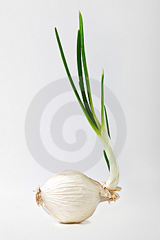 Onion On White Stock Photo - Image: 23198500