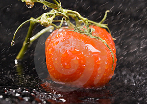 Tomates Imagen de archivo - Imagen: 2321241