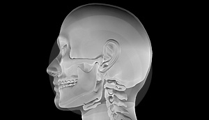 X-Ray of Human Head Stock Photo