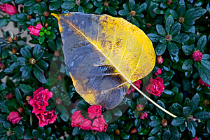 A Wet Yellow Leaf Royalty Free Stock Photo - Image: 23206275