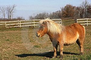 Miniature Horse Stock Image - Image: 23210291