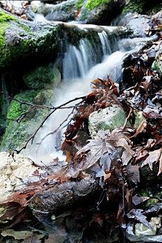 Rotte Bladeren Royalty-vrije Stock Foto - Afbeelding: 23224885