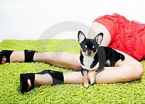 Recht Kleiner Lustiger Hund, Der Auf Frauenfüßen Sitzt Stockbild - Bild: 23256551