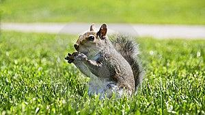 Squirrel Stock Image - Image: 23291021