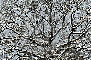 Snowy Branches Royalty Free Stock Photos - Image: 23296728