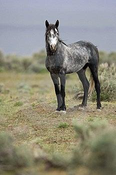 Cavallo selvaggio che sta da solo Immagine Stock