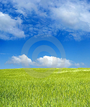 Barley field over blue sky Royalty Free Stock Photo