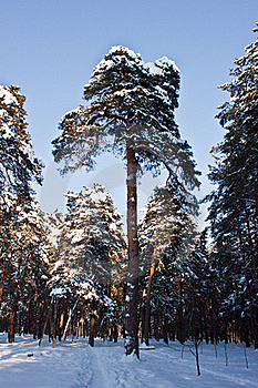 Trees In Winter Stock Photography - Image: 23314072