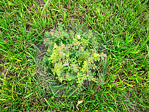 Green Grass Royalty Free Stock Photo - Image: 23322085