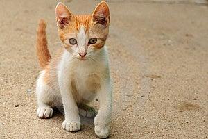 Orange Kitty Cat Stock Image - Image: 23328501