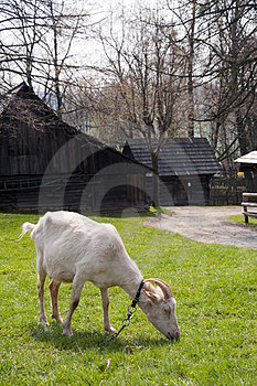 Goat Stock Photos - Image: 23330773