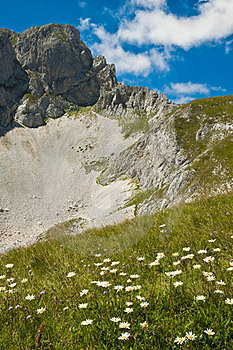Beautiful Mountain Landscape With Flowers Stock Photo - Image: 23348750