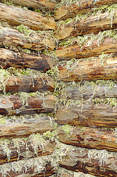 Corner Of Wood Log House Chinked With Moss Stock Photography - Image: 23360862