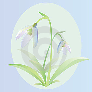 Snowdrop Royalty Free Stock Images - Image: 23375899