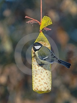 Great Tit (Parus Major) Royalty Free Stock Image - Image: 23386046