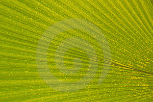 Tropical Leaf Royalty Free Stock Photos - Image: 2344838