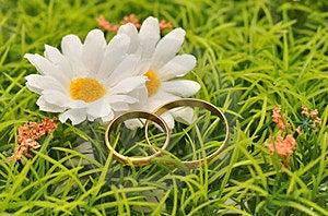 Boucles Et Marguerites Photo libre de droits - Image: 23409335