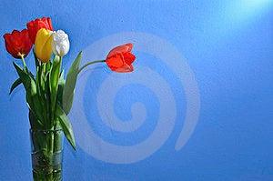 Tulips Royalty Free Stock Image - Image: 23410936