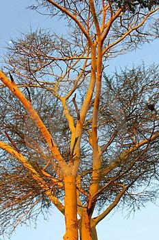 Afrikanische Fauna Stockbild - Bild: 23425971