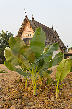 Banana Old Church. Royalty Free Stock Photography - Image: 23426167