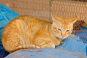 Yellow Cat To Sleep. Stock Photography - Image: 23426272