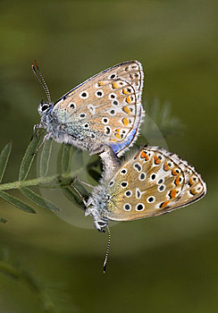 Butterfly Love Royalty Free Stock Photography - Image: 23440727