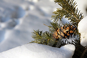 Winter's Tale Royalty Free Stock Images - Image: 23445499