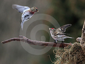Conflict Royalty Free Stock Photography - Image: 23448127