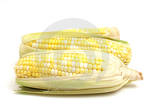 Corn on the cob on white