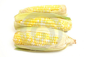 3 ears of corn Royalty Free Stock Photography