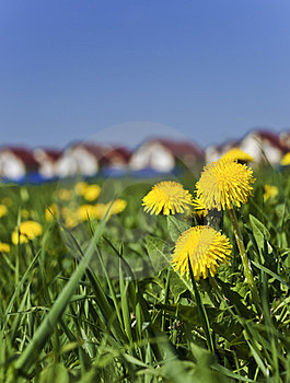 Spring Dandelions Next To The Village Stock Photo - Image: 23502940