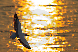 Seagull Flying Stock Photography - Image: 23505912