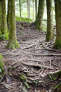 Tree Stem And Tree Root Royalty Free Stock Image - Image: 23516296