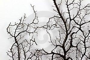 Коралл вентилятора Стоковое Изображение RF - изображение: 23516476