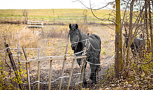 Skinny Horse Outside In Fenced Yard Area Stock Image - Image: 23523111