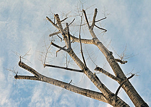 Branch Diagonal Royalty Free Stock Image - Image: 23530976