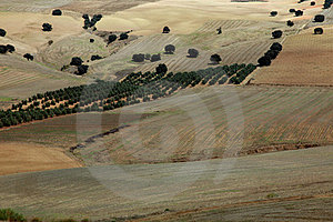 Agricultural Landscape Andalusia, Spain Royalty Free Stock Photography - Image: 23546177