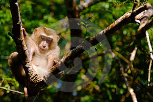 Monkey Stock Photos - Image: 23549943