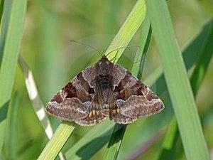 Moth Royalty Free Stock Photo - Image: 23555135