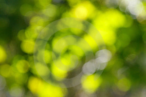 Beautiful Green Bokeh Royalty Free Stock Photos - Image: 23570088