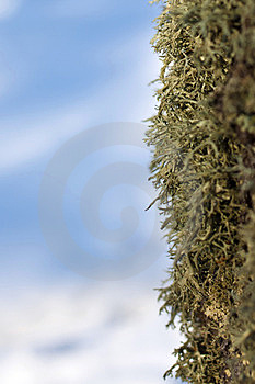 Moss Stock Photography - Image: 23588592